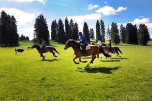 Pferde_Jura_chevaux