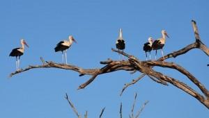 white-stork-657533_640
