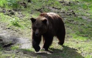 bear-44295_640