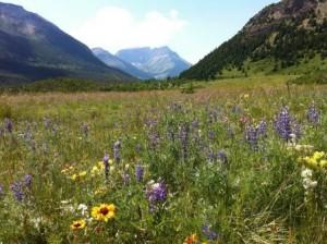wildflowers-142900_W