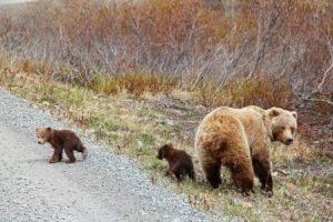 AlaskaKanada_1